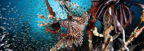 Baa Atoll UNESCO Biosphere Reserve