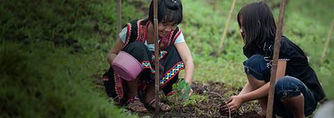 Soneva Forest Restoration