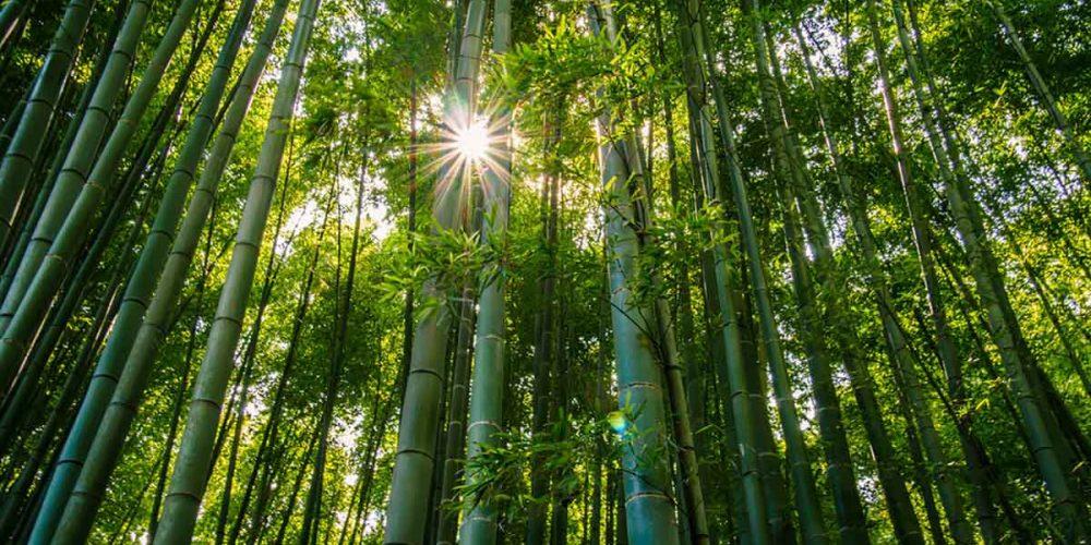 arashi-slider1